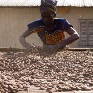 czekolada cukiernicza produkcja